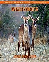 Wasserbock: Tolle Bilder & Wissenswertes ueber Tiere in der Natur
