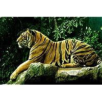 ロイヤルベンガルタイガー動物 - #84 - キャンバス印刷アートポスター 写真 部屋インテリア絵画 ポスター 90cmx60cm