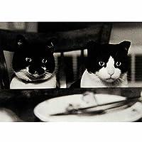ポストカード・アニマル Z モノクロの猫たち