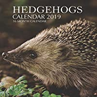 Hedgehogs Calendar 2019: 16 Month Calendar