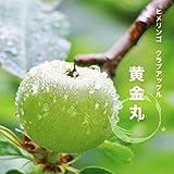 姫リンゴ (ヒメリンゴ) 黄金丸 2年生 接ぎ木 苗 クラブアップル 果樹苗木 果樹苗 【観賞花木】