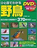 DVD付き ひと目でわかる野鳥 画像