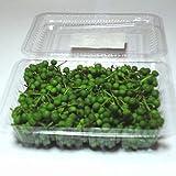山椒の実 100g前後(福岡・大分産)冷凍保存すれば1年中ご利用できます