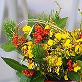 お正月用アレンジメント オンシジューム 花工房花贈りエーデルワイス フラワーギフト