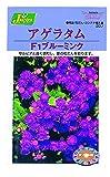 カネコ種苗 草花タネ207 アゲラタムF1ブルーミンク 10袋セット