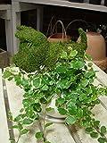 犬(イヌ)さん Sサイズ アニマル トピアリー モス 動物シリーズ 斑入りフィカスプミラを植え付けています インテリア陶器鉢・受け皿付き ミニ観葉植物