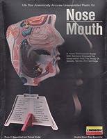 lin01339Lindberg Human鼻/口( Lifeサイズ解剖学的に正確な)モデルキット