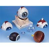 3B社 眼球模型 視覚器(眼球)5倍大・7分解ジャイアントモデル眼窩床付 (f11)