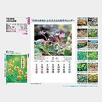 2020年カレンダー 日本の山野草