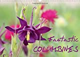 Fantastic Columbines 2018: The Variety of Granny's Bonnet or Columbine is Remarkable (Calvendo Nature)
