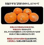 みかん 訳あり 送料無料 8kg ご自宅用 熊本県産 熟 サイズ不選別 ミカン 蜜柑