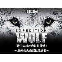 野生のオオカミを探せ!~北米の大自然に生きる (吹替版)