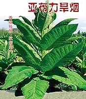種子パッケージ:5G 2000+種子:5Gヤブリ種子が成長OrganicLeafEasy 2000+種子