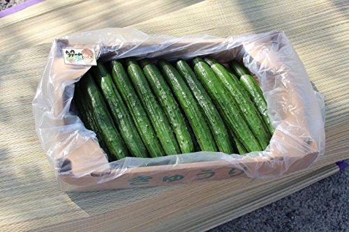 大内ファーム 農家直送 もぎたて新鮮きゅうり A級品 2kg