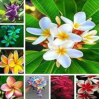 種子:Type17 50:ガーデンバルコニーの美しい盆栽のビルマ花の種RR6