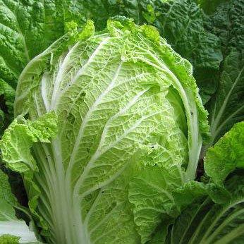 【レシピ】どんぶり一杯食べられるという「白菜のサラダ」を作ってみたい!