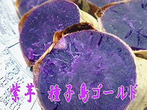 希少種子島産 紫芋種子島ゴールドMサイズ5kg入り