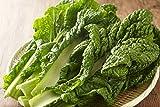 かつお菜(約3-5枚)カツオ菜
