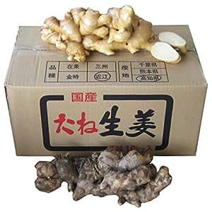 高知県産 近江生姜 10kg