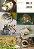 カラーアトラスエキゾチックアニマル 哺乳類編 増補改訂版 ─種類・生態・飼育・疾病─ 画像