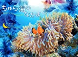 2020うみまーる中判ムーンカレンダー `ちゅら海のなかまたち−Friends of the Okinawan sea' (月の満ち欠け)