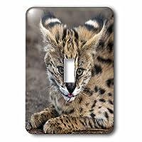 3drose LLC lsp 70989_ 1Serval Cat、Kapamaゲーム予約、南アフリカaf42spi0103Sergio Pitamitz Single切り替えスイッチ