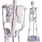 iimono117 人体骨格模型 直立 スタンド付 高精度 85cm / 骨格標本 1/2人体モデル 全身骨格模型 教材 医学 接骨院