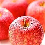 山形県産 サンふじ りんご 10kg (ご家庭用 22玉-46玉入り 生食可)