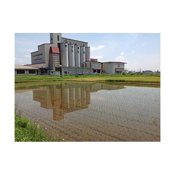 【精米】栃木県産 無洗米 コシヒカリ 平成27年産の紹介画像7