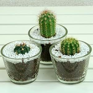 ミニサボテングラス鉢3個セット