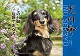 ダックス川柳 [2012年 カレンダー]
