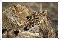 ライオンカブのティンサイン 金属看板 ポスター / Tin Sign Metal Poster of Lioness Cub