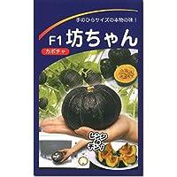 ミニカボチャ 南瓜 種子 坊ちゃん かぼちゃ (10粒)