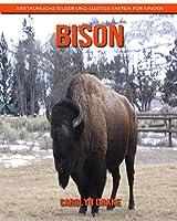 Bison: Erstaunliche Bilder und lustige Fakten fuer Kinder