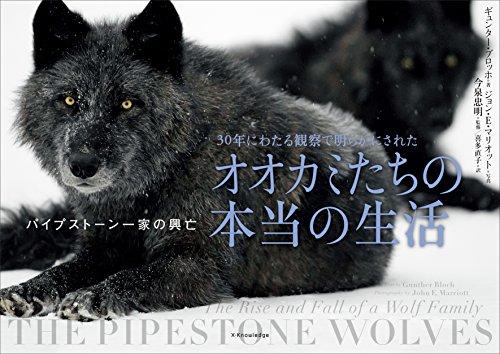 30年にわたる観察で明らかにされたオオカミたちの本当の生活 パイプストーン一家の興亡