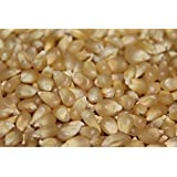 50+ Seeds : Popcorn Seed: Pennsylvania Dutch Butter Popcorn Fresh Seed