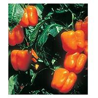 パプリカ 種 【 オレンジキングピーマン 】 種子 小袋(約20粒)