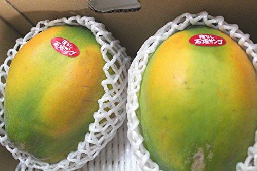 沖縄県産フルーツパパイア 2kg