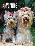 Yorkshire Terriers 2018 Calendar