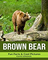 Brown Bear: Fun Facts & Cool Pictures
