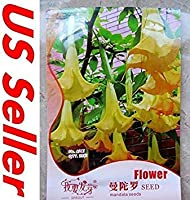 PLATのFIRM:25個のPCS盆栽種子F8、キダチチョウセンアサガオ属アンサマードリームTrum