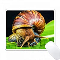 土地のカタツムリ。人気のある画像。 PC Mouse Pad パソコン マウスパッド