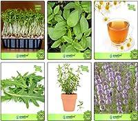 SEEDシードによって種子クレス、レモンバジル、ドイツChamoe、Terragon、ペニーロイヤル種子コンボパックのためのシードコンボ(パケットあたり6)