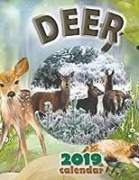 Deer 2019 Calendar