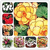 PLAT会社:新50個/袋盆栽リーガーベゴニア美しい盆栽マルチフラップデコレーションホームミニガーデン鉢植えの播種: