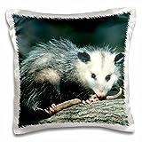 3drose Danita Delimont–Opossum–キタオポッサム、キタオポッサム、イリノイ州のツリーJuvenile–枕ケース 16x16 inch Pillow Cas..