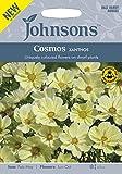 JOFL 英国ジョンソンズシード Cosmos XANTHOS コスモス クサントス