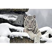 雪の日に白い虎動物 - #45620 - キャンバス印刷アートポスター 写真 部屋インテリア絵画 ポスター 90cmx60cm