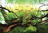 300ピース ネイチャーアクアリウム 水の景色 流木の中 300-174 画像