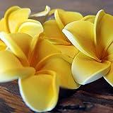 バリ アジアン雑貨 造花 バリウッド:プルメリアのかわいい造花5つセット!イエローの小さいサイズ